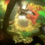 Акула Бала. Очень миролюбивая рыба.