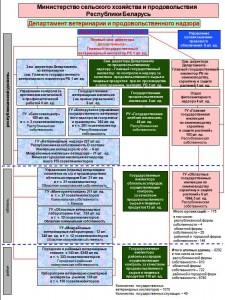 Схема. Организация ветеринарной службы Республики Беларусь