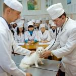 занятия в клинике болезней мелких животных и птиц