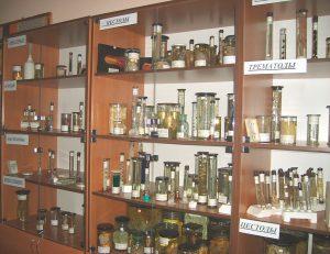 Музей кафедры паразитологии