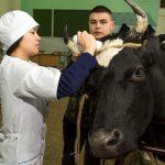 Государственные экзамены по практическим навыкам и умениям студенты 4 курса ССПВО факультета ветеринарной медицины успешно сдали!