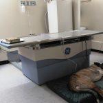 Пациент перед рентгеном