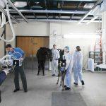 Рентген кабинет для крупных животных