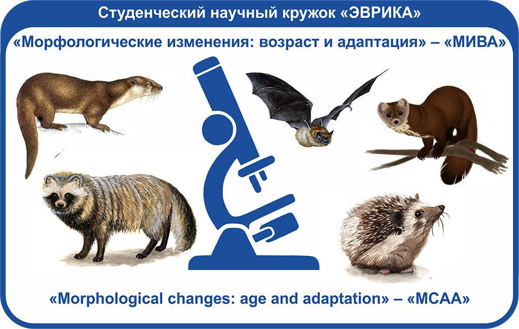 «Морфологические изменения: возраст и адаптация» – «МИВА»