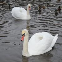 Студенты 1 курса приобретают навыки кормления дикой водоплавающий птицы