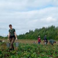 Помощь в уборке урожая!